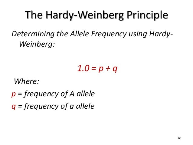hardy weinberg allele frequency example