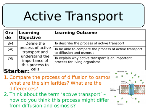 example of an active transport